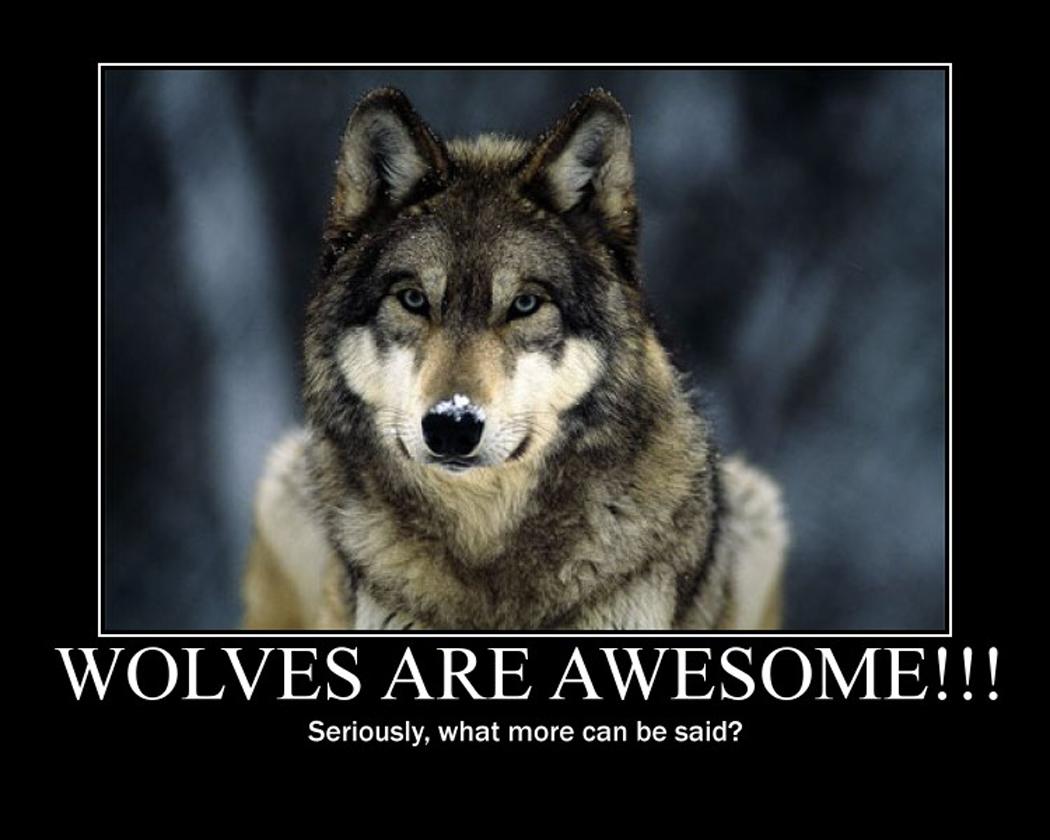 Wolf Spirit Quotes. QuotesGram