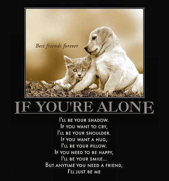 Funny Quotes About Being Best Friends Animals. QuotesGram