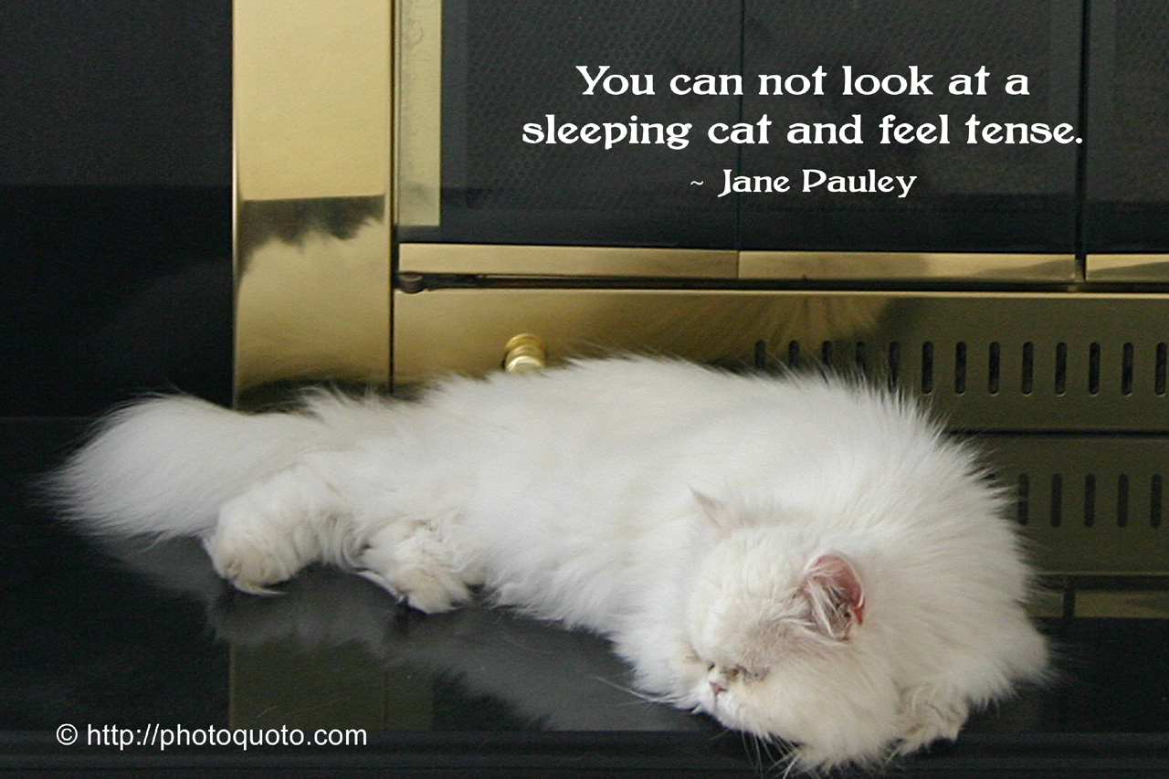 quotes about sleeping cats quotesgram