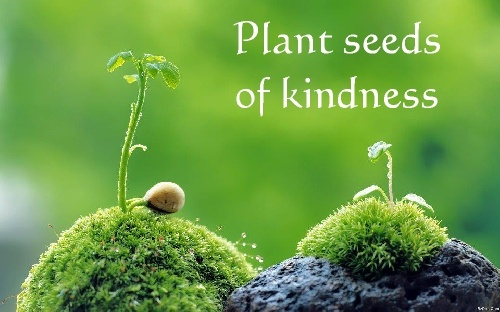 Plant Seeds Of Kindness Quotes. QuotesGram