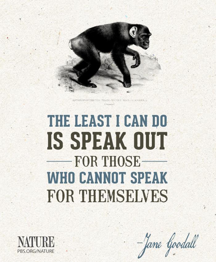 Animal Activist Quotes. QuotesGram