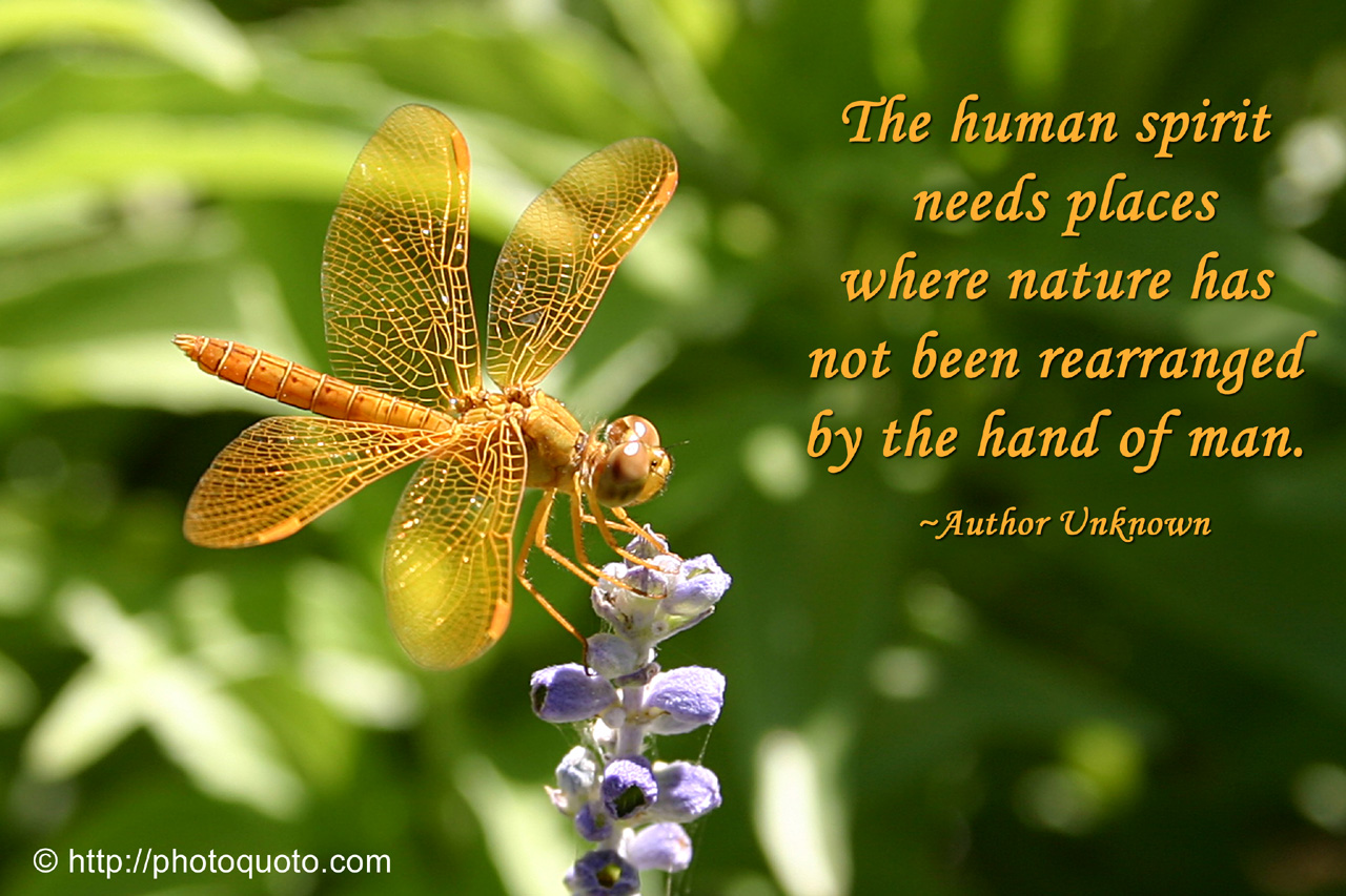 Proverbs On Nature S Beauty