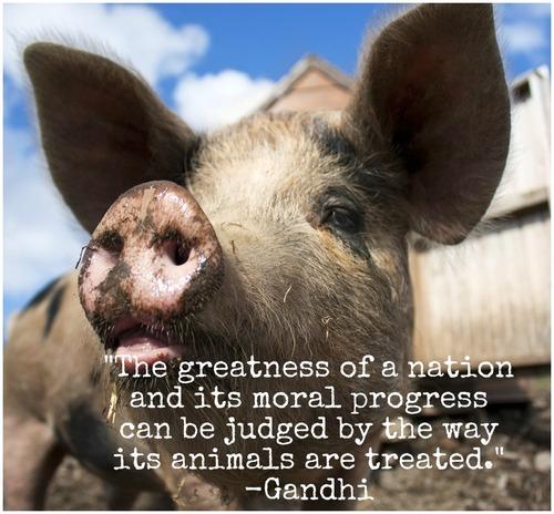 animal rights progress