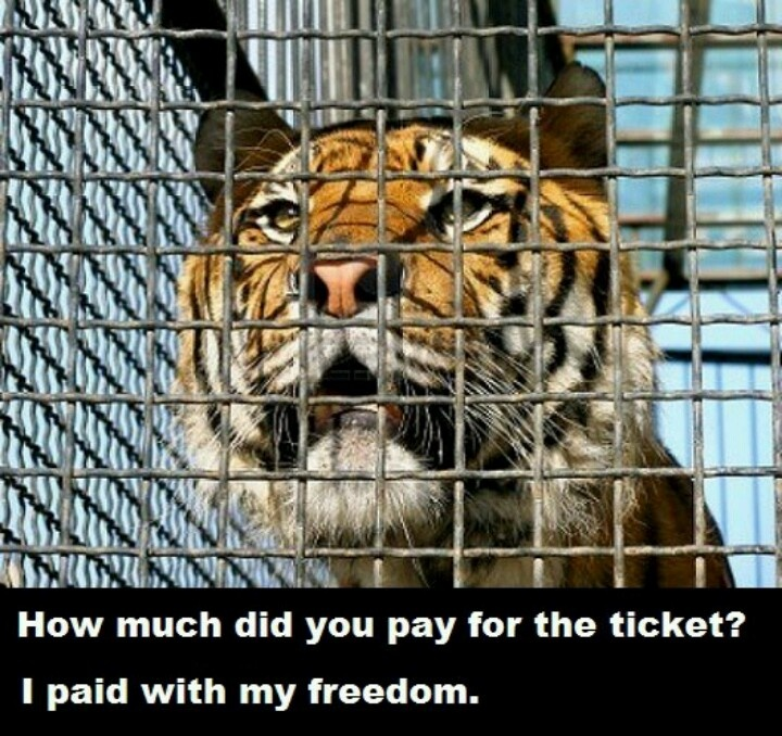 animals captivity Challenges, among which are ethical ques tions concerning animal welfare although some individuals oppose keeping wildlife in captivity, including at zoos and aquaria, most acknowledge that this practice will continue we should, therefore, do our best to ensure that captive wild animals are maintained in a professional,.