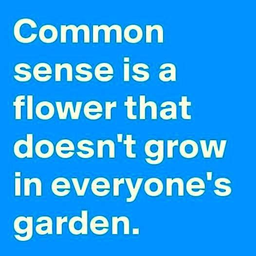 Humor Inspirational Quotes: No Common Sense Quotes. QuotesGram