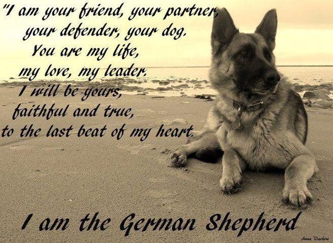German Shepherd Quotes Poems. QuotesGram