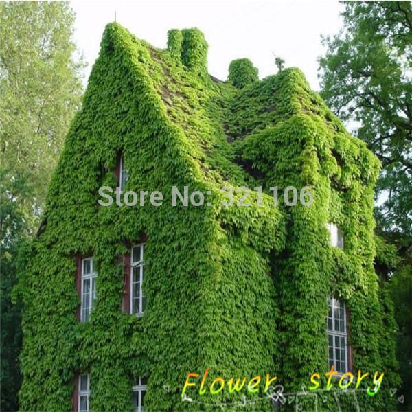 Ivy Plant Quotes Quotesgram