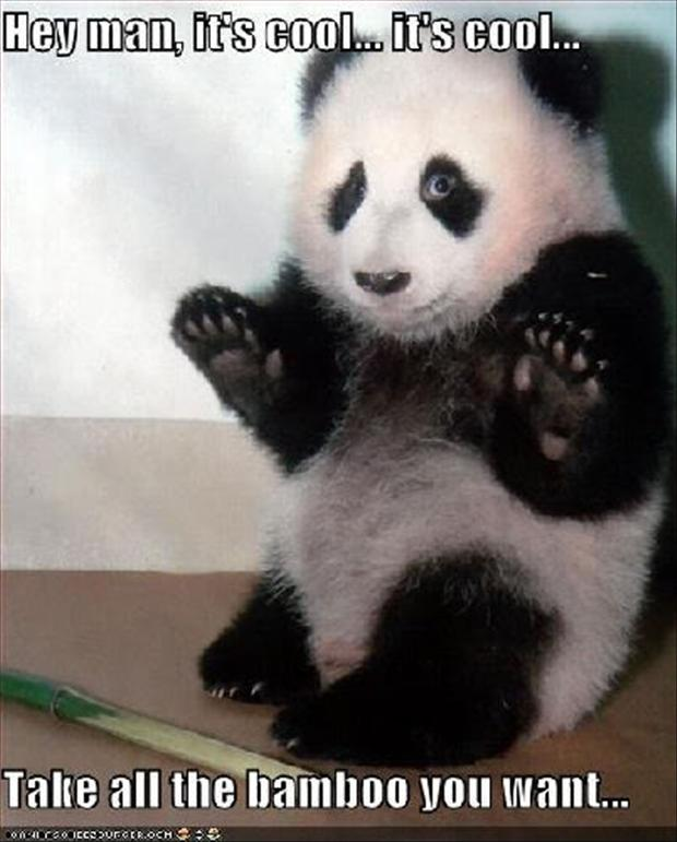 Panda Bear Funny Quotes Quotesgram