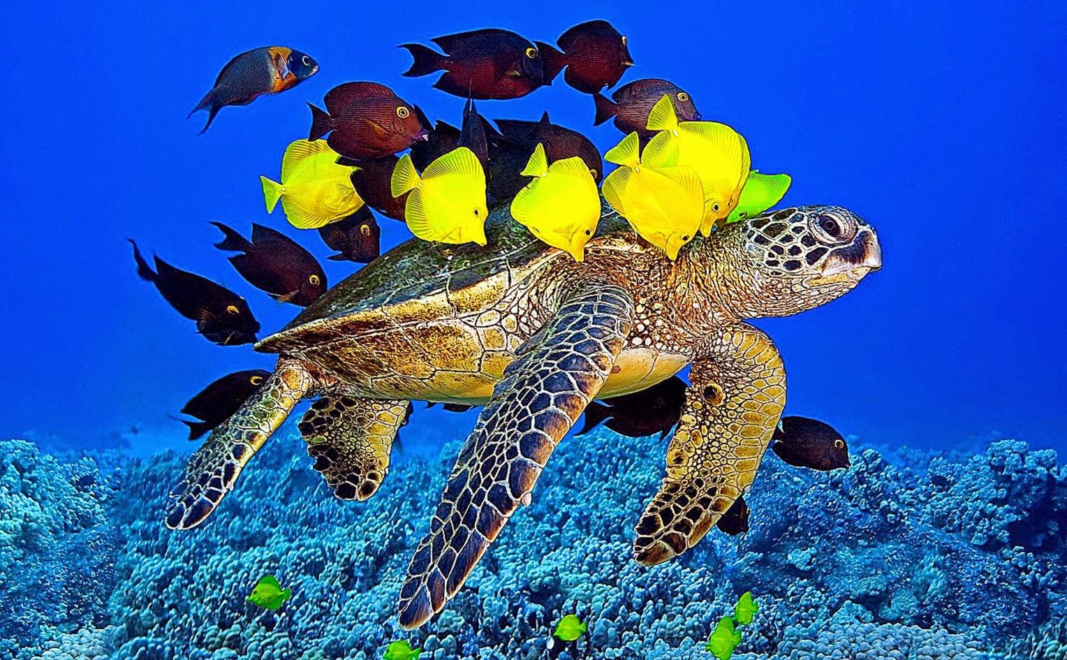 underwater fish wallpaper freshwater wwwimgkidcom
