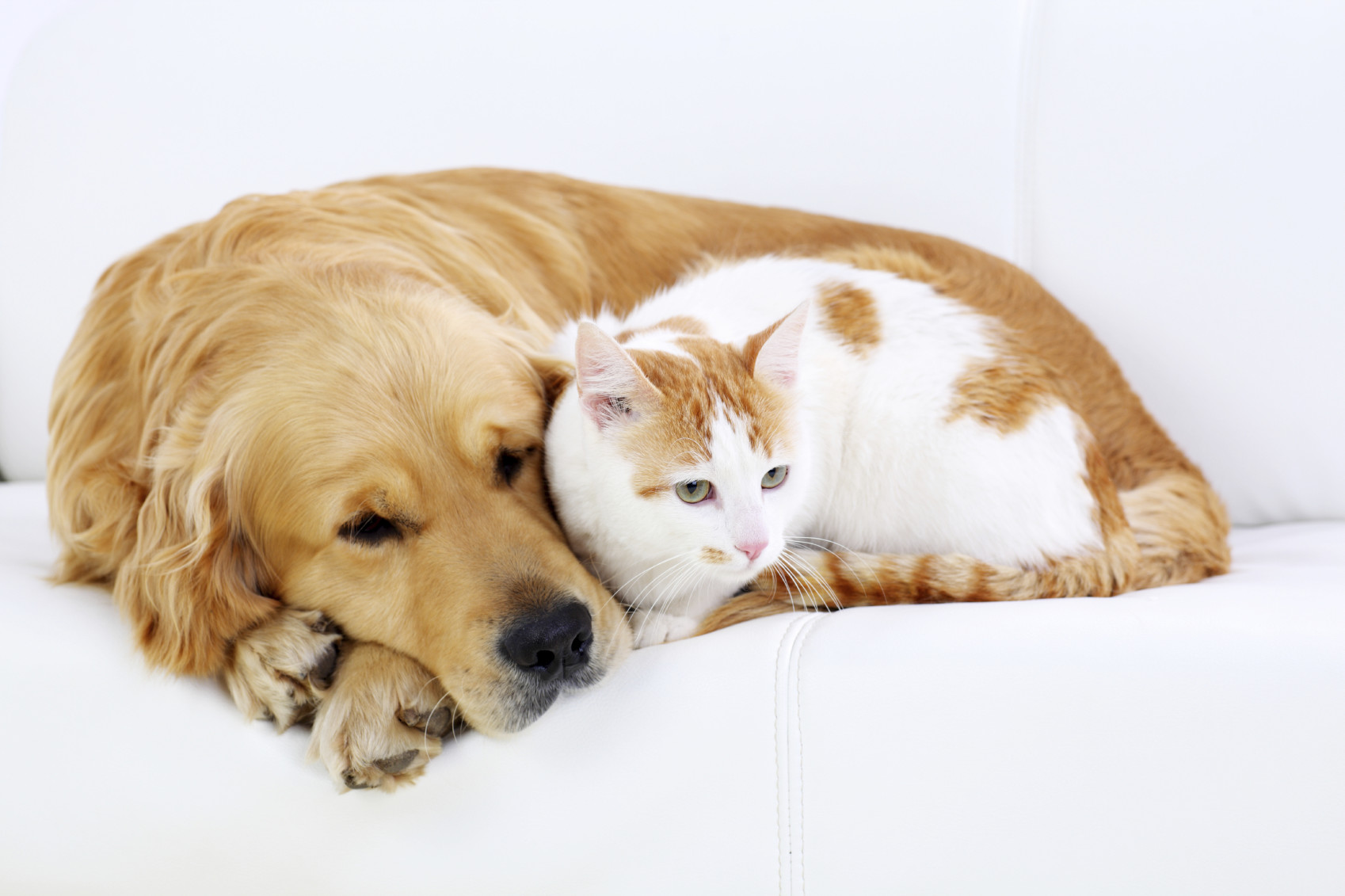 Dog And Cat Together Quotes