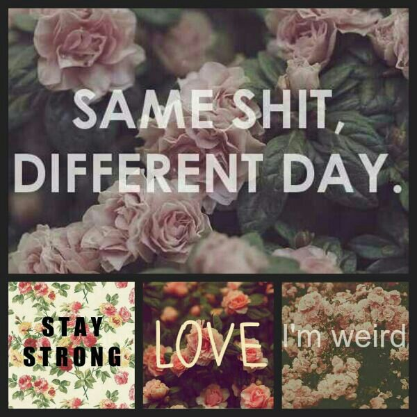 Same Shit Different Day Quotes. QuotesGram