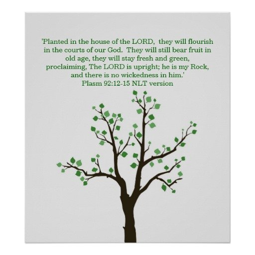Christian Meaning Of The Christmas Tree