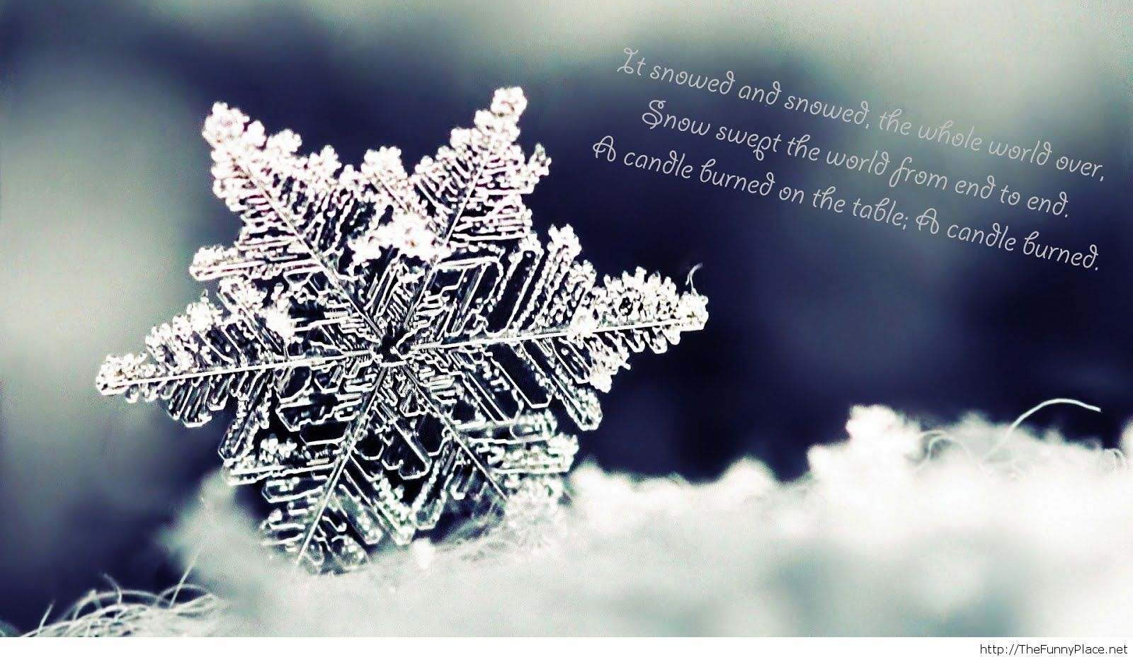 Winter Weather Funny Quotes Quotesgram