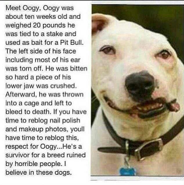 Helping Hurt Animals Quotes. QuotesGram
