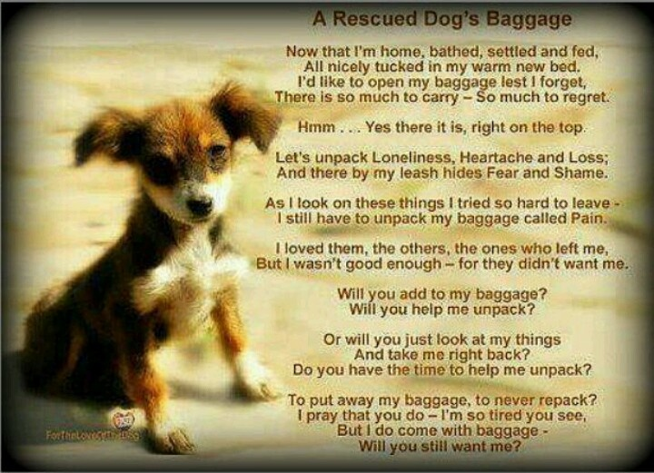 Quotes About Rescue Dogs. QuotesGram