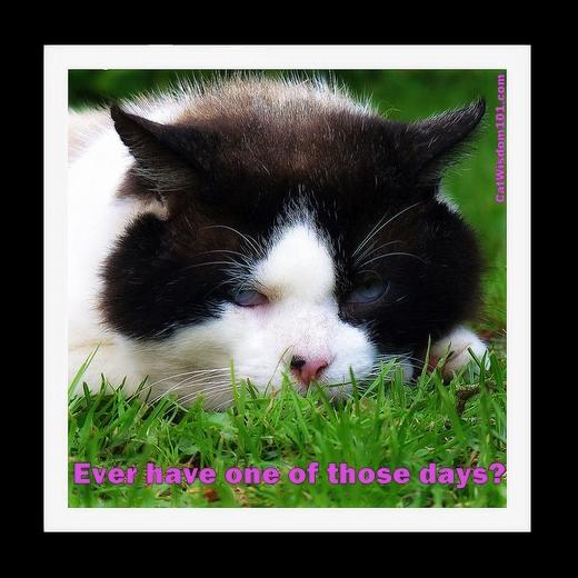 1779162084-cat-wisdom-domino-feral-one-of-those-days-1.jpg