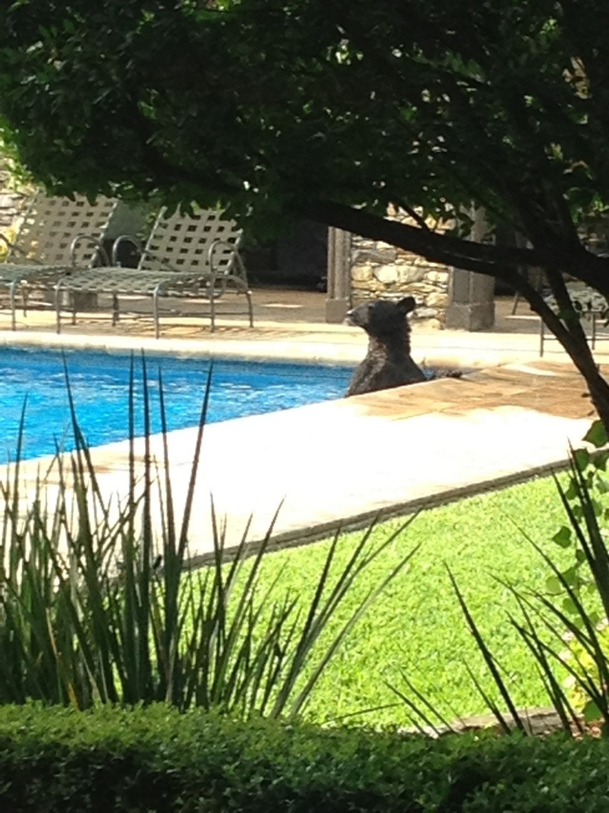 Funny quotes about swimming pools quotesgram for Small pool pics