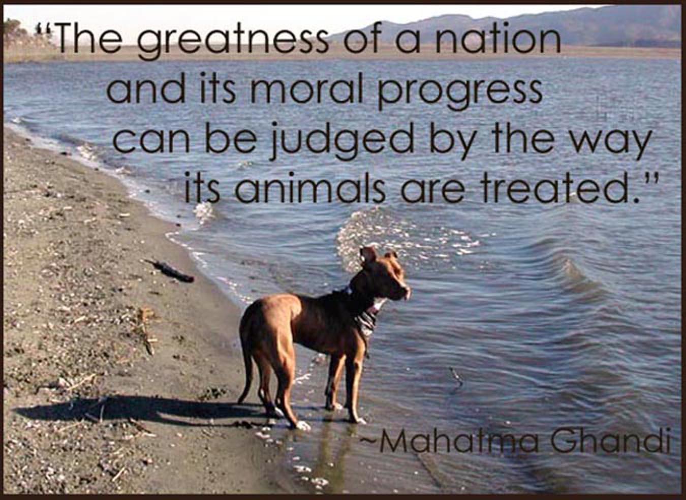 Famous Quotes About Pit Bulls Famous Dog Quot...