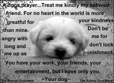 Prayers And Quotes Of Dogs Quotesgram