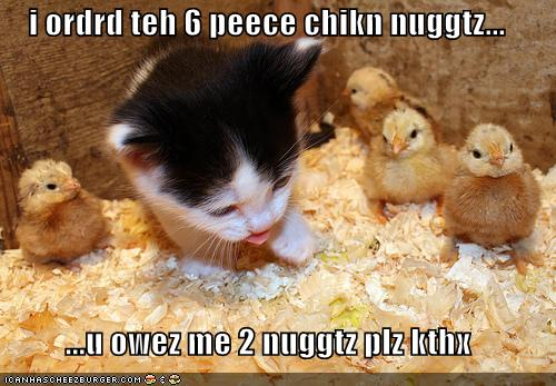 Funny Chicken Quotes And Sayings: Funny Chicken Quotes. QuotesGram