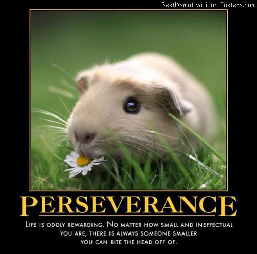 Persistence Motivational Quotes: Inspirational Quotes About Pigs. QuotesGram