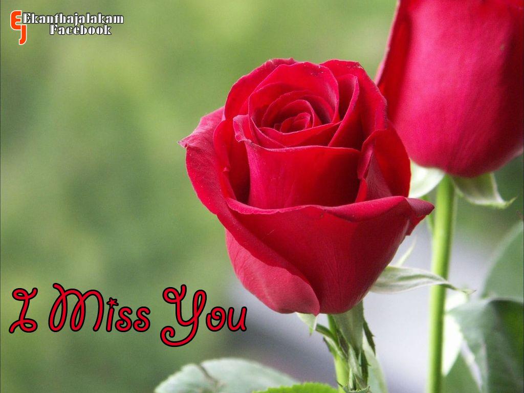 Cute Rose Quotes Quotesgram