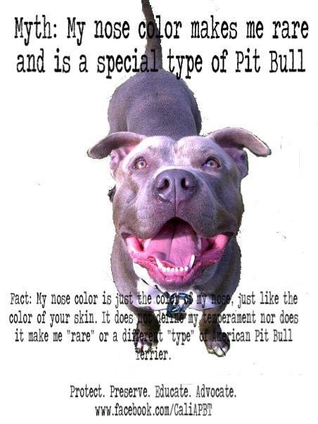 Famous Quotes About Pit Bulls Save The Pitbull Breed...