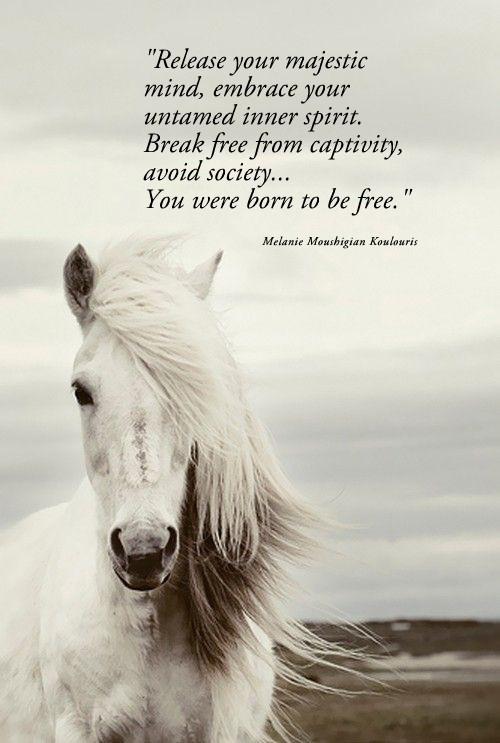 Emotional Quotes About Life: Spiritual Horse Quotes. QuotesGram