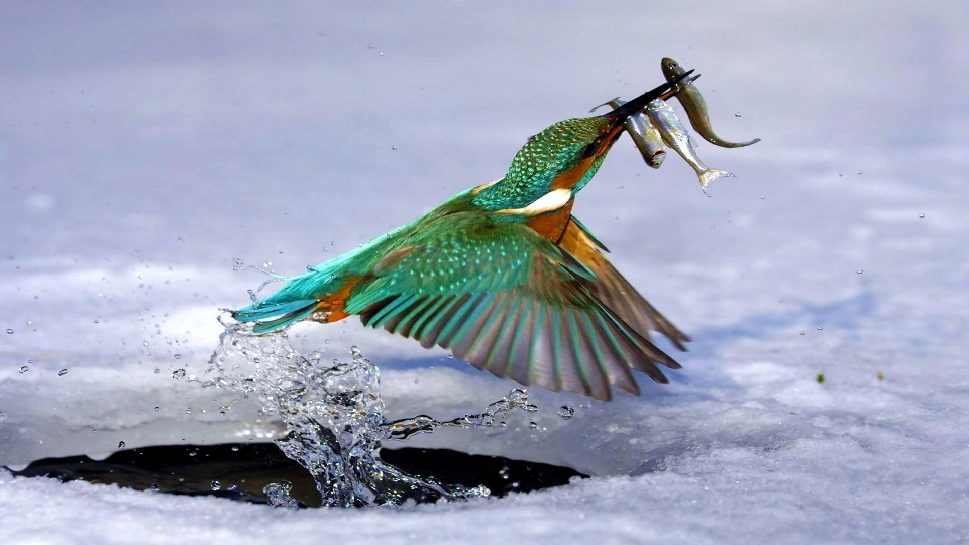 Новогодняя рыбалка картинки на рабочий стол