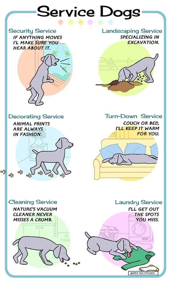 Service Dog Quotes Quotesgram