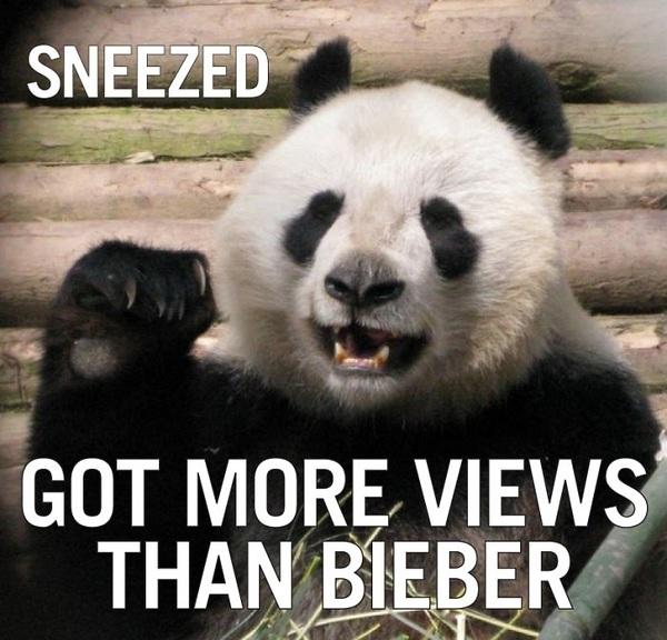 Funny Panda Quotes. QuotesGram  Funny Panda Quo...