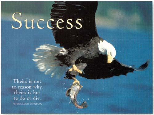 achieve quotes eagles quotesgram