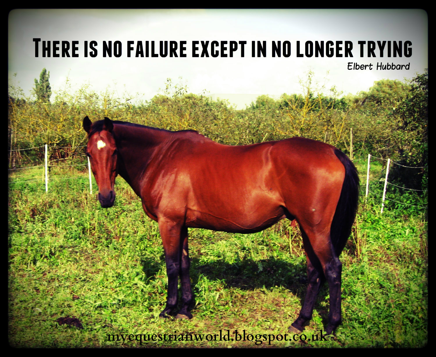 Funny Horse Quotes Inspirational. QuotesGram