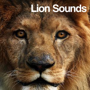 Lion Roar Sound Effect - YouTube