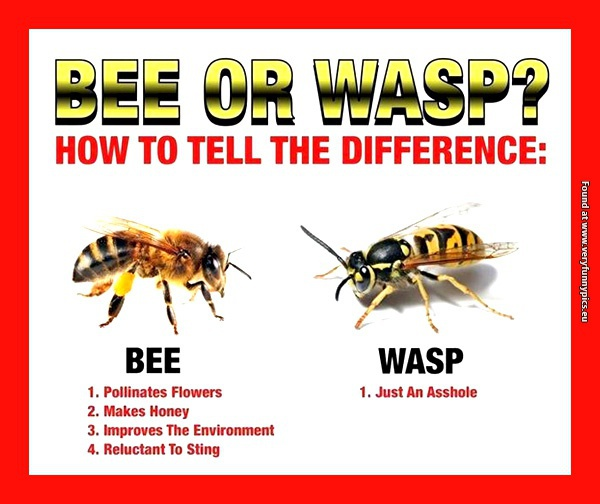What Is The Difference Between A Yellow Jacket And A Wasp Funny Bee Quote...