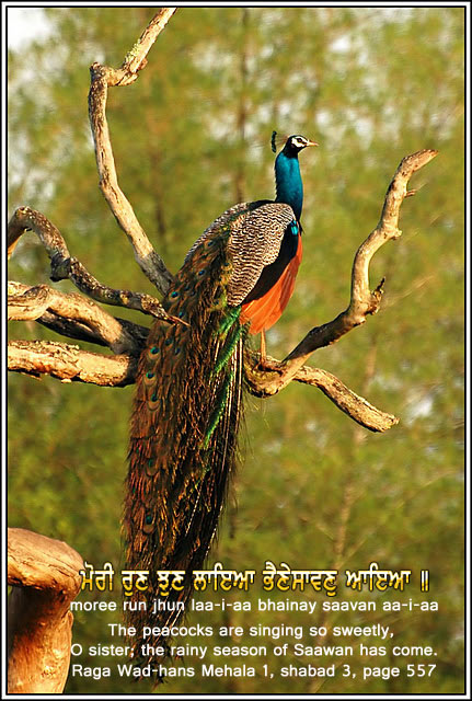 Beauty Quotes About Peacocks. QuotesGram