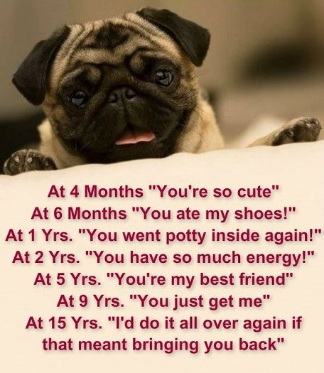 pug poems funny pug quotes and sayings quotesgram 2218