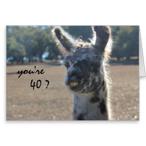 Llamas Quotes Inspirational: Llama Birthday Quotes. QuotesGram