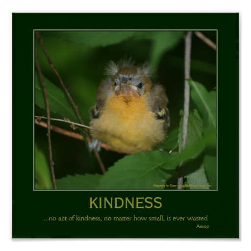 inspirational quotes about birds  quotesgram