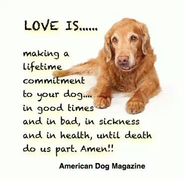 Loosing Pet Quotes Dogs