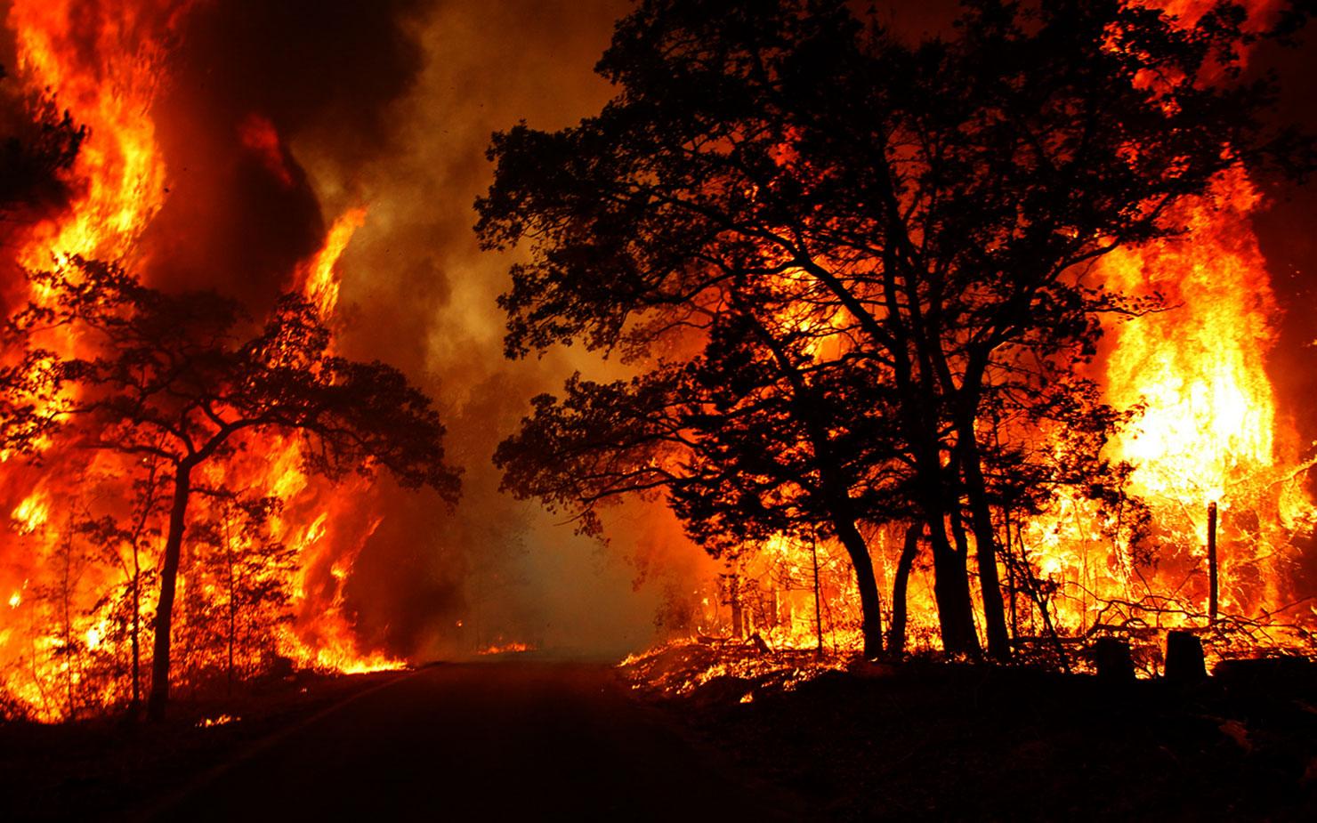 Вогнеборці ліквідували вісім пожеж в екосистемах Львівщини