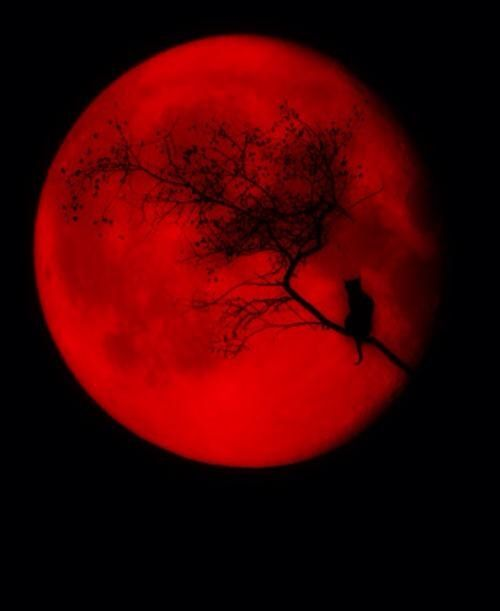 red moon quotes - photo #10