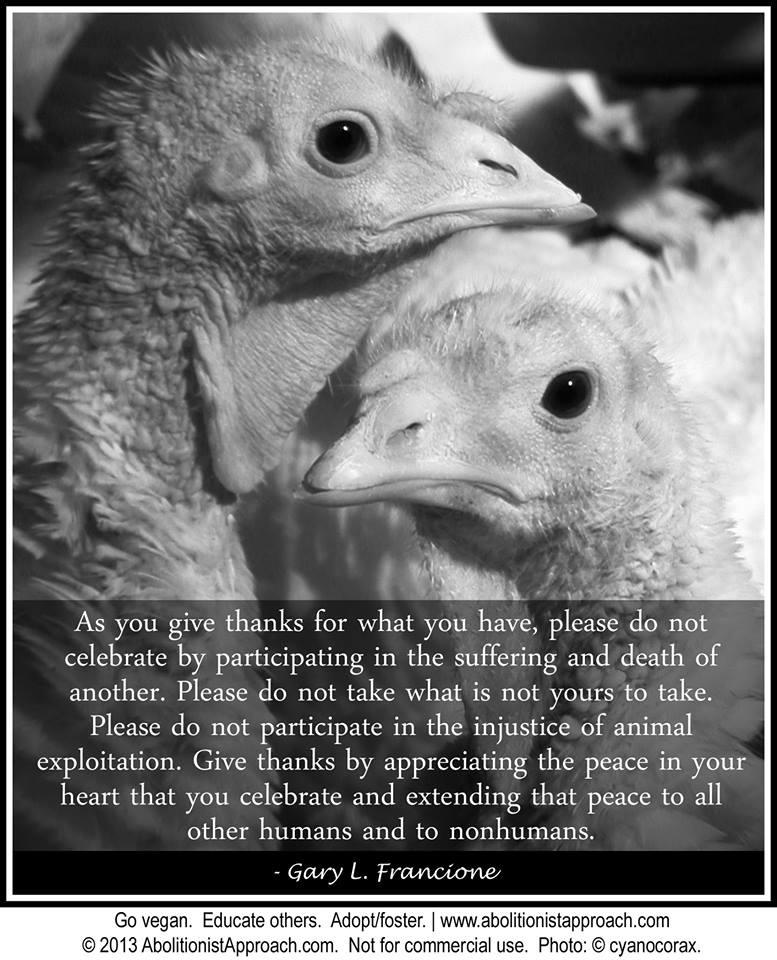 Vegan Quotes About Animals Quotesgram