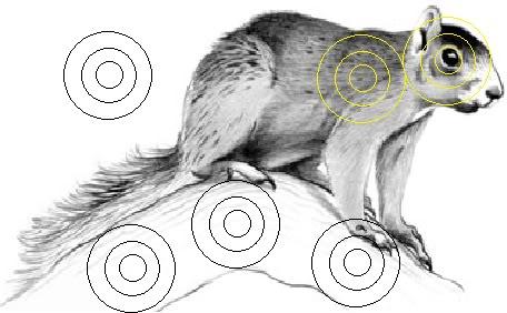 Impertinent image inside squirrel target printable