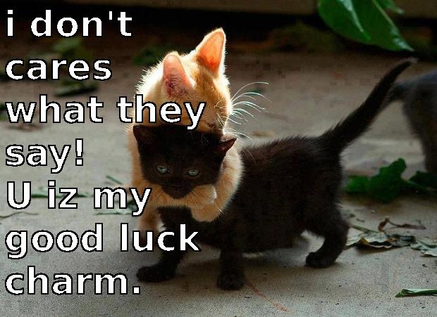 Good Luck Cat Quotes Quotesgram