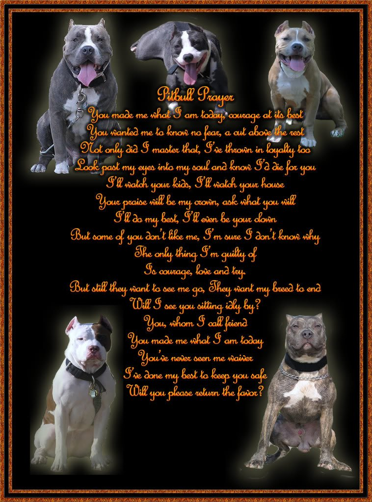 pitbull poems and quotes  quotesgram