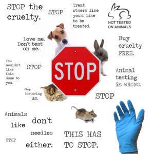 animal testing needs to stop essay