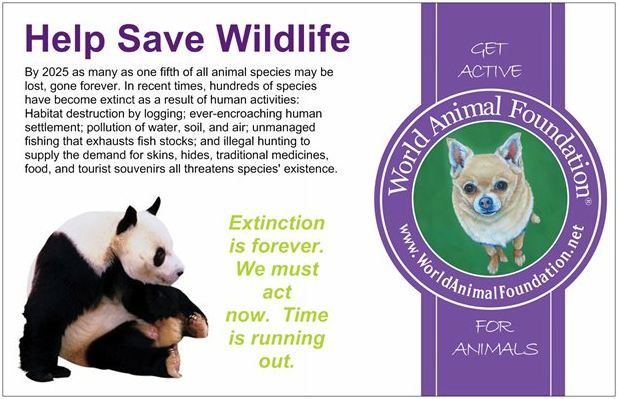 Endangered Species Quotes. QuotesGram