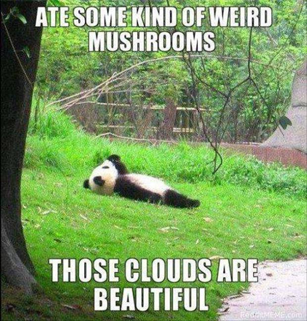Panda Wallpaper Funny Quotes