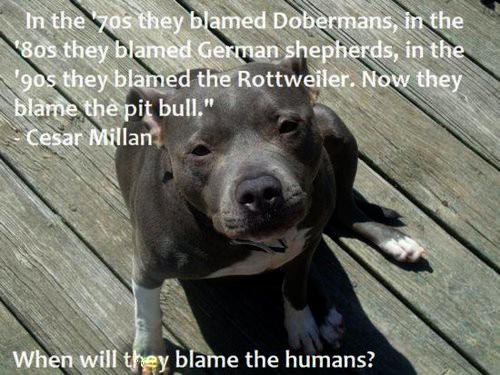 Pitbull Dogs Quotes Inspirational. QuotesGram